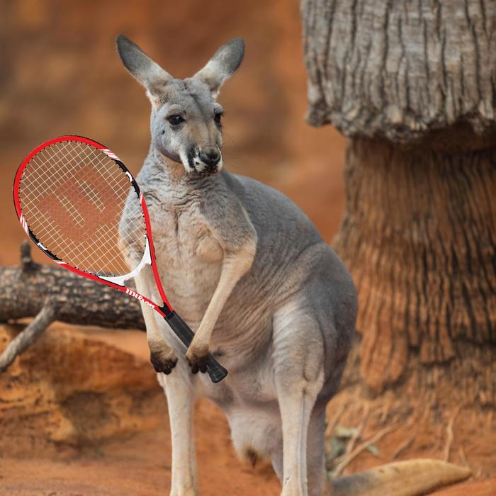 Kangaroo + Tennis | #71