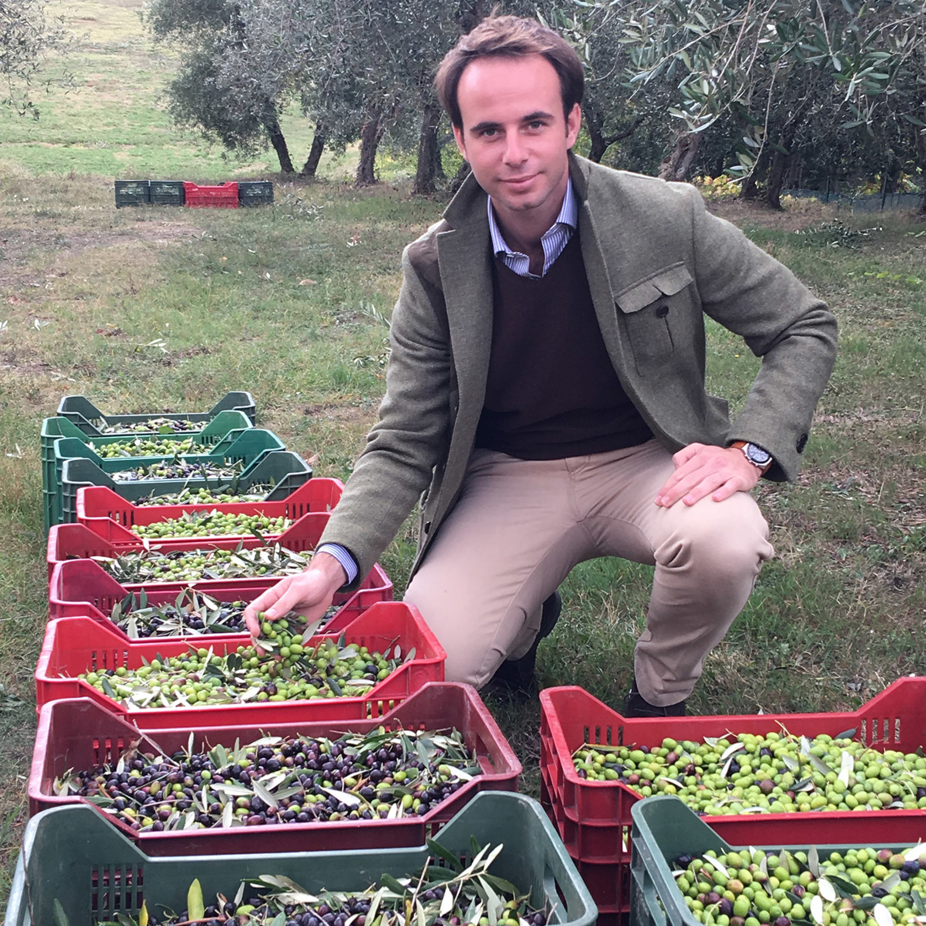 Episode 320: 30 generations of Olive Oil - Frescobaldi